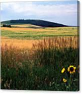 Golden Fields Forever Canvas Print