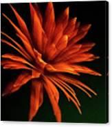 Golden Fireworks Flower Canvas Print