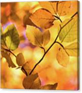 Golden Foliage Canvas Print