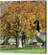 Golden Goose Canvas Print