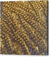 Golden Grains - Hoarfrost On A Solar Panel Canvas Print