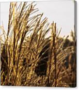 Golden Grass Flowers Canvas Print