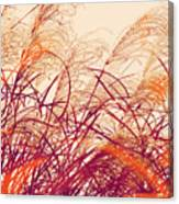 Abstract Pampas  Canvas Print