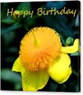 Golden Guinea Happy Birthday Canvas Print