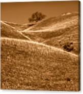 Golden Hills Of California Photograph Canvas Print