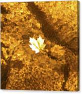 Golden Leaf In Water Canvas Print