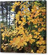 Golden Leaves Canvas Print