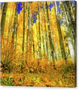 Golden Light Of The Aspens - Colorful Colorado - Aspen Trees Canvas Print