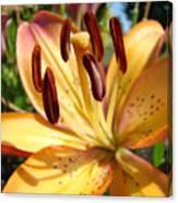 Golden Lily Flower Orange Brown Lilies Art Prints Baslee Troutman Canvas Print
