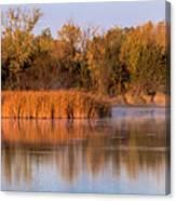 Golden Morning Shoreline Pano Canvas Print