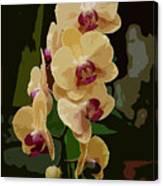 Golden Moth Orchid Canvas Print