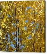 Golden October Canvas Print
