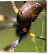 Golden Orb Spider Canvas Print