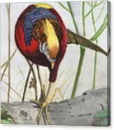Golden Pheasant Canvas Print
