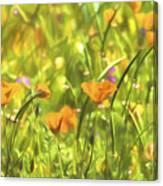Golden Poppies In A Gentle Breeze  Canvas Print