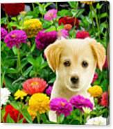 Golden Puppy In The Zinnias Canvas Print