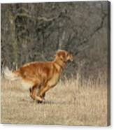 Golden Retriever 2 Canvas Print