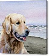 Golden Retriever At The Beach Canvas Print