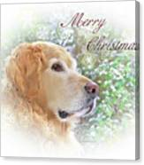 Golden Retriever Dog Merry Christmas Card Canvas Print