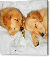 Golden Retriever Dog Puppies Sleeping Canvas Print