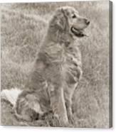 Golden Retriever Dog Sepia Canvas Print