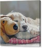 Golden Retriever Dog Sleeping With My Friend Canvas Print