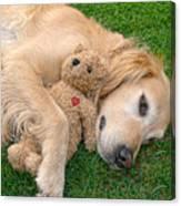 Golden Retriever Dog Teddy Bear Love Canvas Print