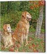Golden Retriever Dogs In Autumn Canvas Print