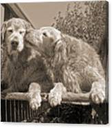 Golden Retriever Dogs The Kiss Sepia Canvas Print