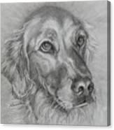 Golden Retriever Drawing Canvas Print