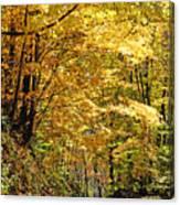 Golden Road Canvas Print
