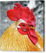 Golden Rooster Portrait Canvas Print