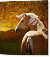 Golden Scout Canvas Print