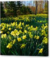Golden Spring Carpet Canvas Print