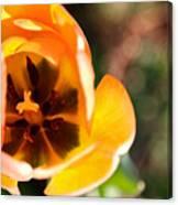 Golden Spring Canvas Print