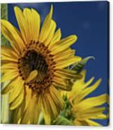 Golden Sunflower Canvas Print