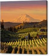 Golden Sunset Over Hood River Pear Orchard Canvas Print