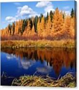 Golden Tamaracks Along The Spruce River Canvas Print