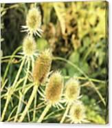Golden Thistles Sextet Canvas Print