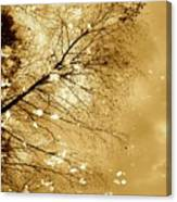 Golden Tones Canvas Print