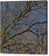 Golden Treetop Canvas Print