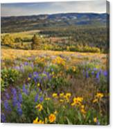 Golden Valley Canvas Print