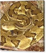 Golden Viper Canvas Print