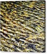 Golden Water On Mountain Lake Canvas Print