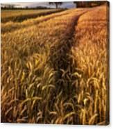 Golden Waves Of Grain Canvas Print