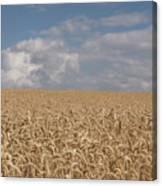Golden Wheat Field Canvas Print