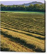 Golden Windrows Canvas Print
