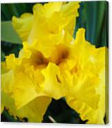 Golden Yellow Iris Flower Garden Irises Flora Art Prints Baslee Troutman Canvas Print