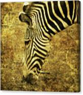 Golden Zebra  Canvas Print
