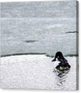 Goldeneye On Ice's Edge Canvas Print